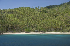 Plantation de noix de coco Image libre de droits