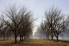 Plantation de noix de pécan photographie stock