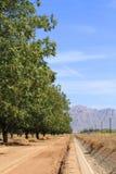 Plantation de noix de pécan dans un désert image stock