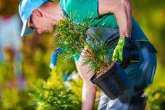 Plantation de nouveaux arbres photos libres de droits