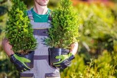 Plantation de nouveaux arbres de jardin photographie stock