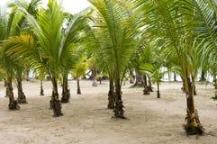 Plantation de palmiers pour l'économie   Photographie stock libre de droits