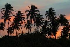 Plantation de paume sur une île tropicale au coucher du soleil au loin Photographie stock libre de droits