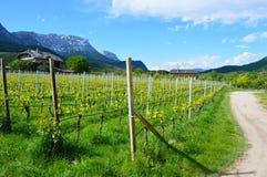 Plantation de raisin près de lac Caldaro à Bolzano/Bozen, Italie Image libre de droits