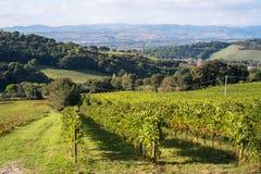 Plantation de raisin près de la ville de Pesaro, Italie photographie stock