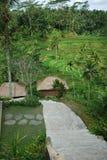 Plantation de riz de Bali Image libre de droits