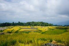 Plantation de riz de Tanatoraja Photo libre de droits