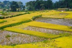 Plantation de riz de Tanatoraja Image stock