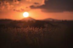 Plantation de soja images libres de droits