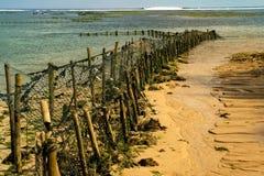 Plantation de spirulina sur la plage à marée basse Photos libres de droits