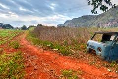 Plantation de tabac - vallée de Vinales, Cuba Photos stock