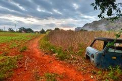 Plantation de tabac - vallée de Vinales, Cuba Photographie stock