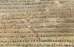 Plantation de terrasse Photo stock