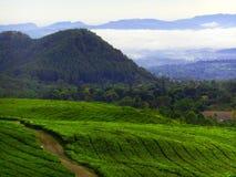 Plantation de thé à la ville de Subang photos stock