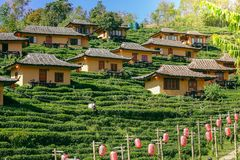 Plantation de thé Baan Rak thaïlandais en Thaïlande Photo stock