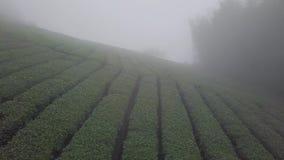 Plantation de thé d'Oolong dans la région de montagnes d'Alishan, Taïwan Vue aérienne en Misty Foggy Weather clips vidéos