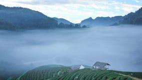 Plantation de thé dans la vue de matin, Chiangmai, laps de temps banque de vidéos