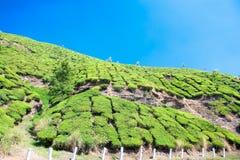 Plantation de thé dans les montagnes de Cardamam. Munnar photo stock