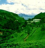 Plantation de thé dans Munnar, Inde - domaine de Pallivasal et usine de thé Photographie stock libre de droits