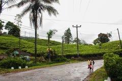 Plantation de thé dans Sri Lanka, Nowember 2011 Image stock