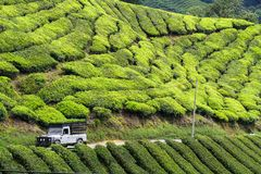 Plantation de thé en montagnes de Cameron, Malaisie Photos stock