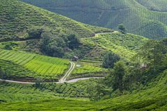 Plantation de thé en montagnes de Cameron, Malaisie Photo stock
