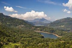 Plantation de thé près de Nuwara Eliya Sri Lanka Photographie stock