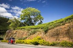 Plantation de thé près de Nuwara Eliya Sri Lanka Photos libres de droits