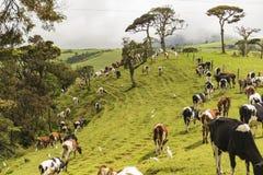Plantation de thé près de Nuwara Eliya Sri Lanka Images stock