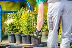 Plantation des arbres de jardin image libre de droits