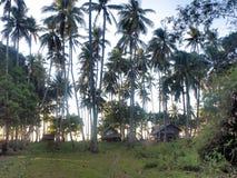 Plantation des arbres de noix de coco Île de Palawan philippines Image stock