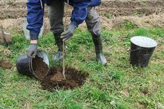 Plantation des arbres fruitiers photographie stock libre de droits