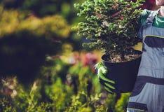 Plantation des arbres impeccables photo stock