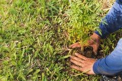 Plantation des arbres pour sauver le monde image stock