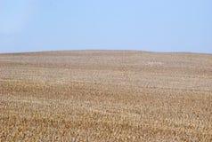 Plantation des céréales photographie stock