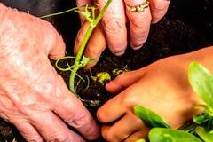 Plantation des fleurs photo stock