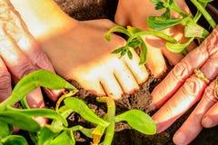 Plantation des fleurs photos libres de droits