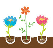 Plantation des fleurs Image stock