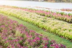 Plantation des fleurs dans le jardin Photo stock