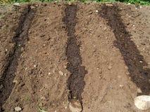 Plantation des graines Images libres de droits