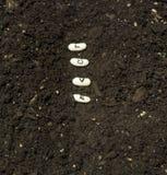 Plantation des graines de l'amour dans une rangée de jardin Photos stock