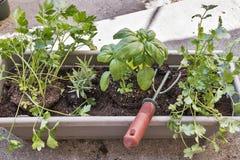 Plantation des herbes dans un jardin de boîte de fenêtre Image stock