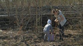 Plantation des jeunes arbres d'arbre Restauration de for?t, protection de l'?cologie clips vidéos