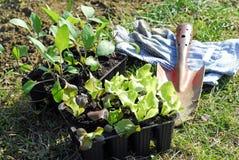 Plantation des jeunes plantes Photos stock