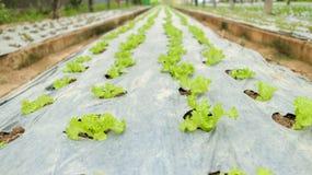 Plantation des légumes photographie stock libre de droits