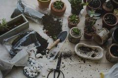 Plantation des pierres de sol de cactus d'usines sur un Tableau en bois Photographie stock libre de droits