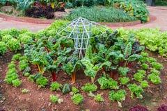 Plantation des tomates Photos libres de droits