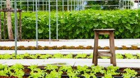 Plantation des tomates Images libres de droits