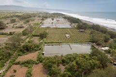 Plantation of  dragon fruit (Hylocereus costaricensis) at Pandasari Beach, Indonesia Stock Photo