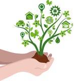 Plantation du concept d'eco d'arbres Photographie stock